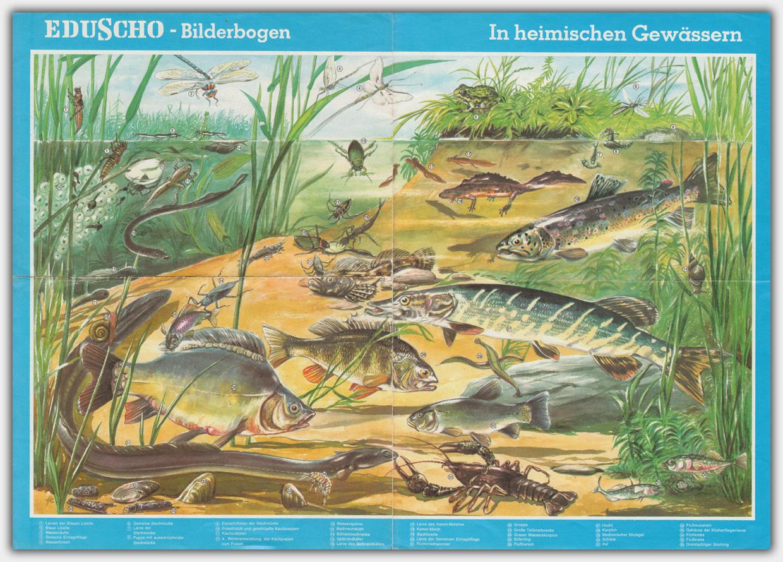 Eduscho Bilderbogen | In heimischen Gewässern