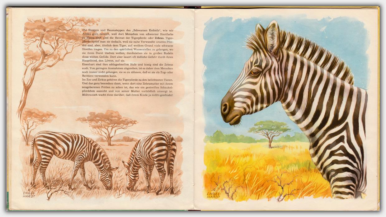 Schöne Tiere aus aller Welt   Innenseite